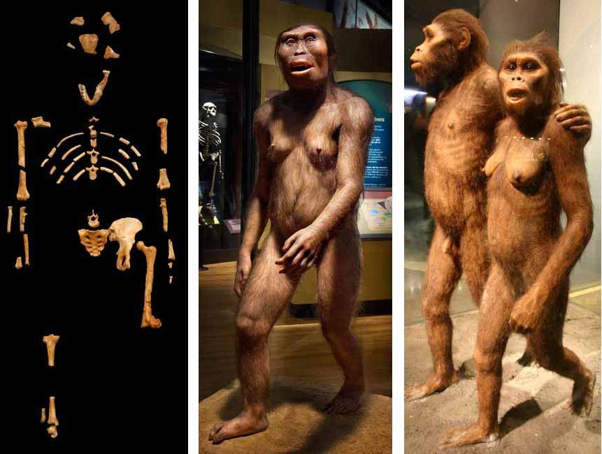 Resultado de imagen de el cráneo de Lucy y sus huesos diminutos